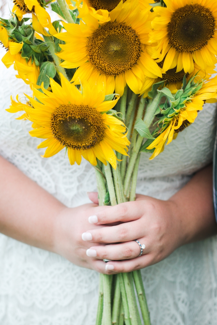 170715-Sunflower-Web-113